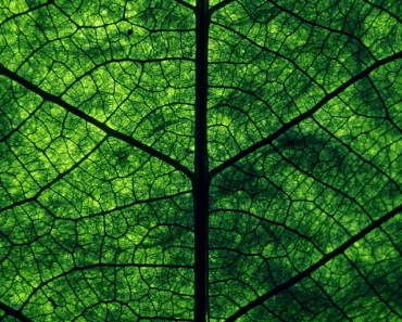 Green Leaf Perspective