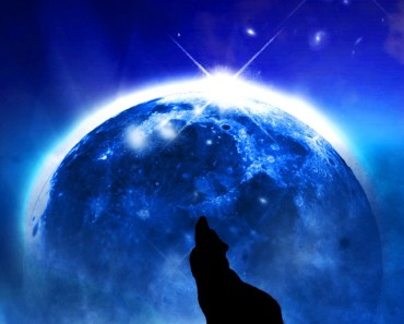 Howling Wolf In the Moonlight