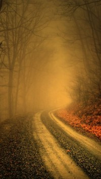 Misty Forest Road
