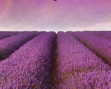 Purple Flower Field Hot Air Balloon