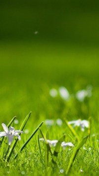 White Small Flowers In Grass
