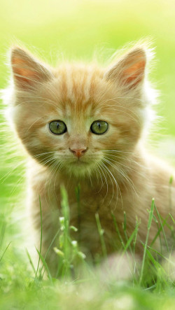 Yellow-Cat-On-The-Grass