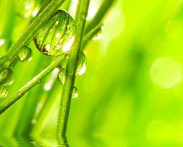Green Grass Water Drops Macro