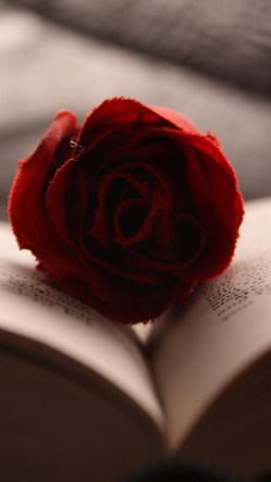 Red Rose On The Book