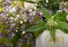 Cannabis Couple Has Their Perfect Weed Wedding At Dispensary On 4/20