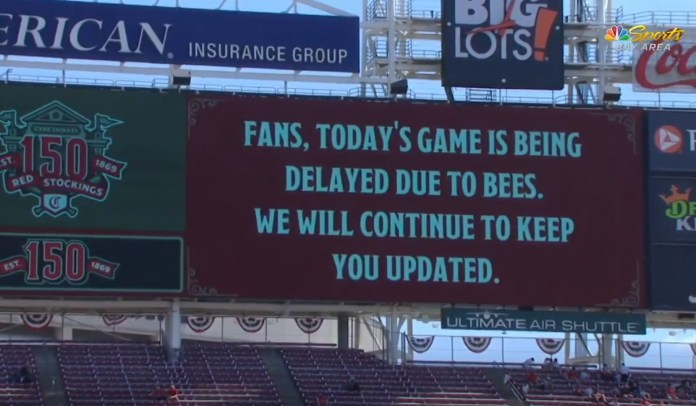 Bees Invade And Cause Delay For Giants-Reds Game