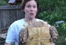 Nature Is Wild: Tortoise Projectile Pees While Owner Holds It