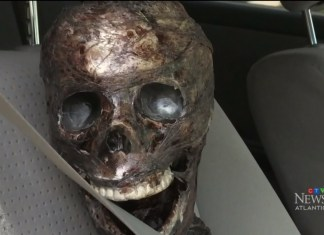 People Call Police Over Woman's Skeleton Decoration In Her Car