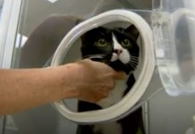 Miracle Cat Survives Spinning Through Washing Machine
