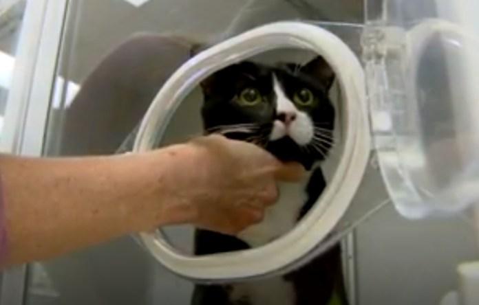 Miracle Cat Survives Spinning Through Washing Machine
