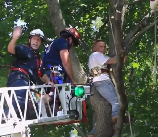 Firefighters Rescue Man Who Climbed Tree To Rescue Cat