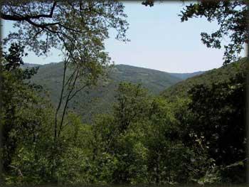 Nepregledne šume Miročkih padina