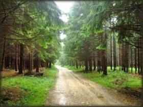 Šume Valkalucija