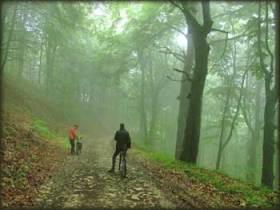 U magli gustih šuma istočno od Velike Brezovice