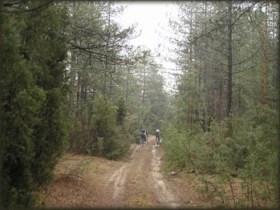 U gustim četinarskim šumama oko Grebenca