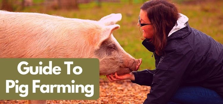 complete guide to pig farming
