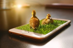 apple ios iphone with two live ducks coming out of the screen