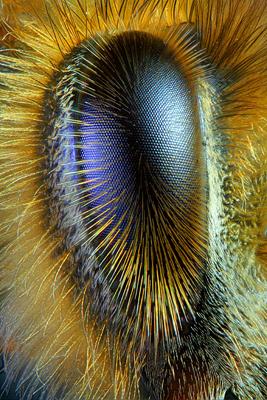 bee-eye