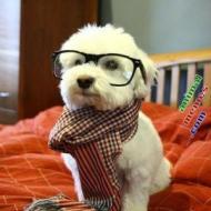 13-10-hipsterdog