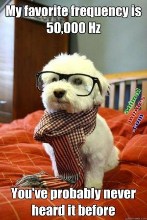 13-10-hipsterdog