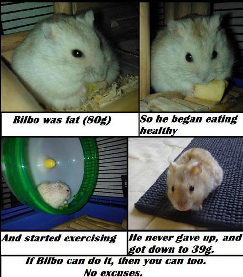14-09-hamster-diet