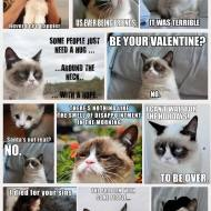 14-12-best-grumpy-cat-meme-compilation