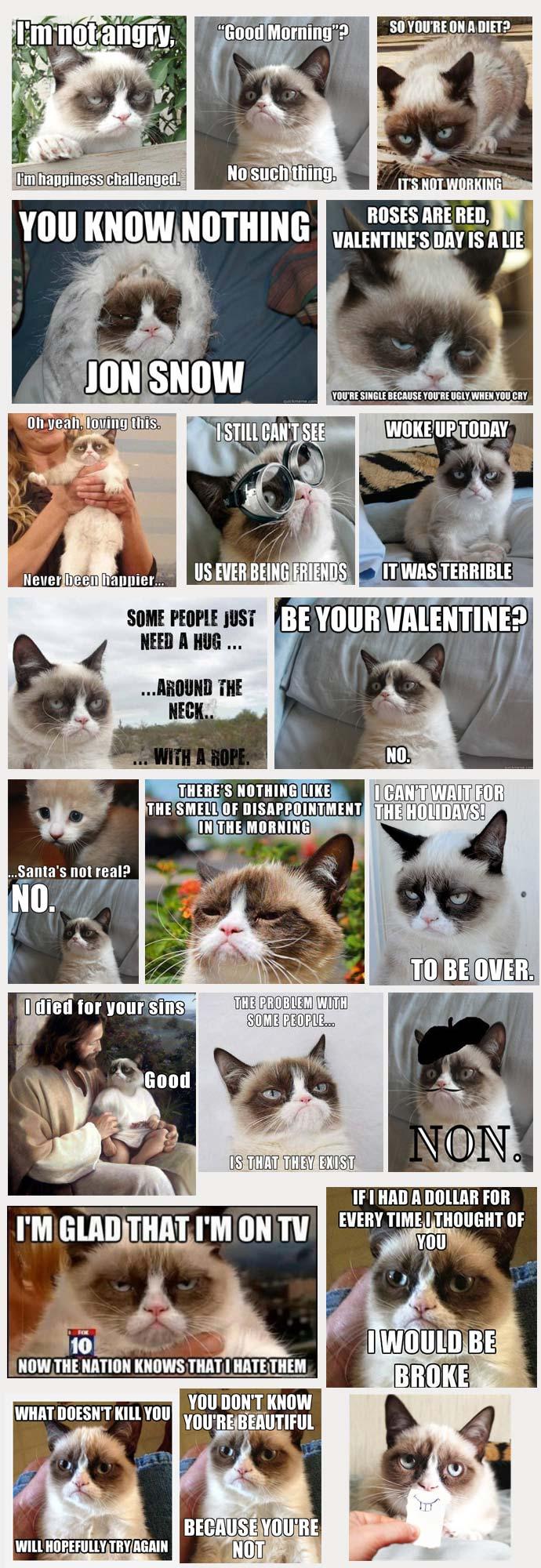 14-12-best-grumpy-cat-meme-compilation-wealthy