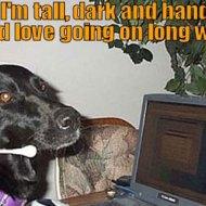 15-10-dog-tall-dark-handsome-dating