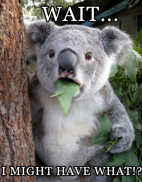 16-01-koalas-chlamydia-extinct-what-meme