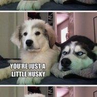 16-02-dog-pun-husky