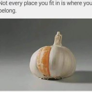 16-03-orange-garlic-place-fit