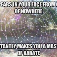 16-03-spider-web-karate-master