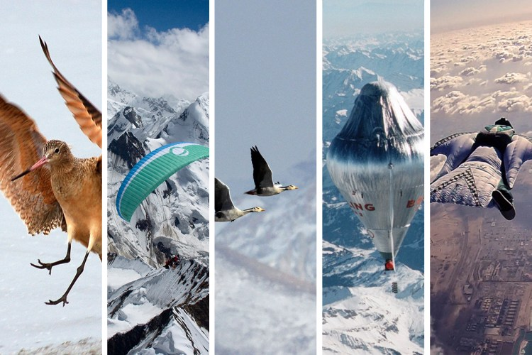 Free Flight Collage