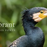 Cormorant Font Family