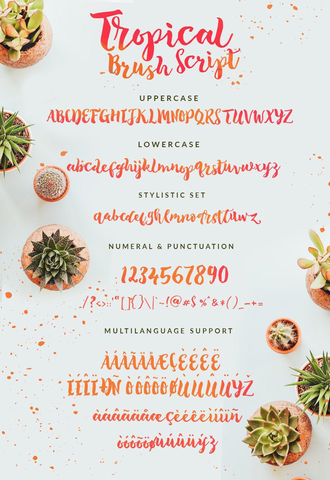 Tropical-Font-3