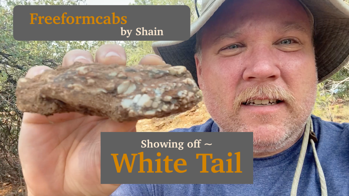 White Tail Featured Image