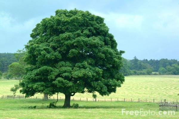 image of a tree by the road