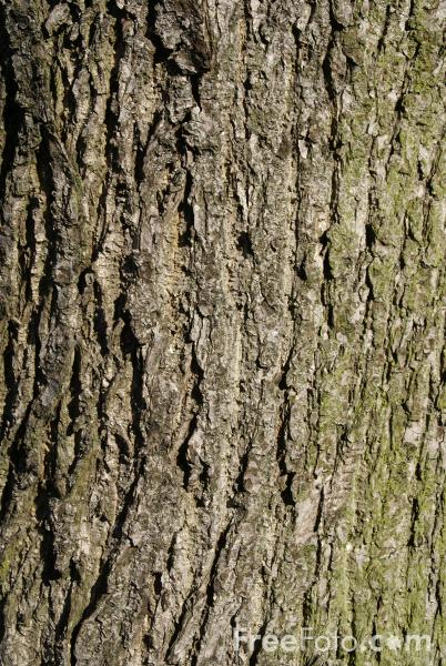 Tree Bark Texture Pictures Free Use Image 33 02 68 By