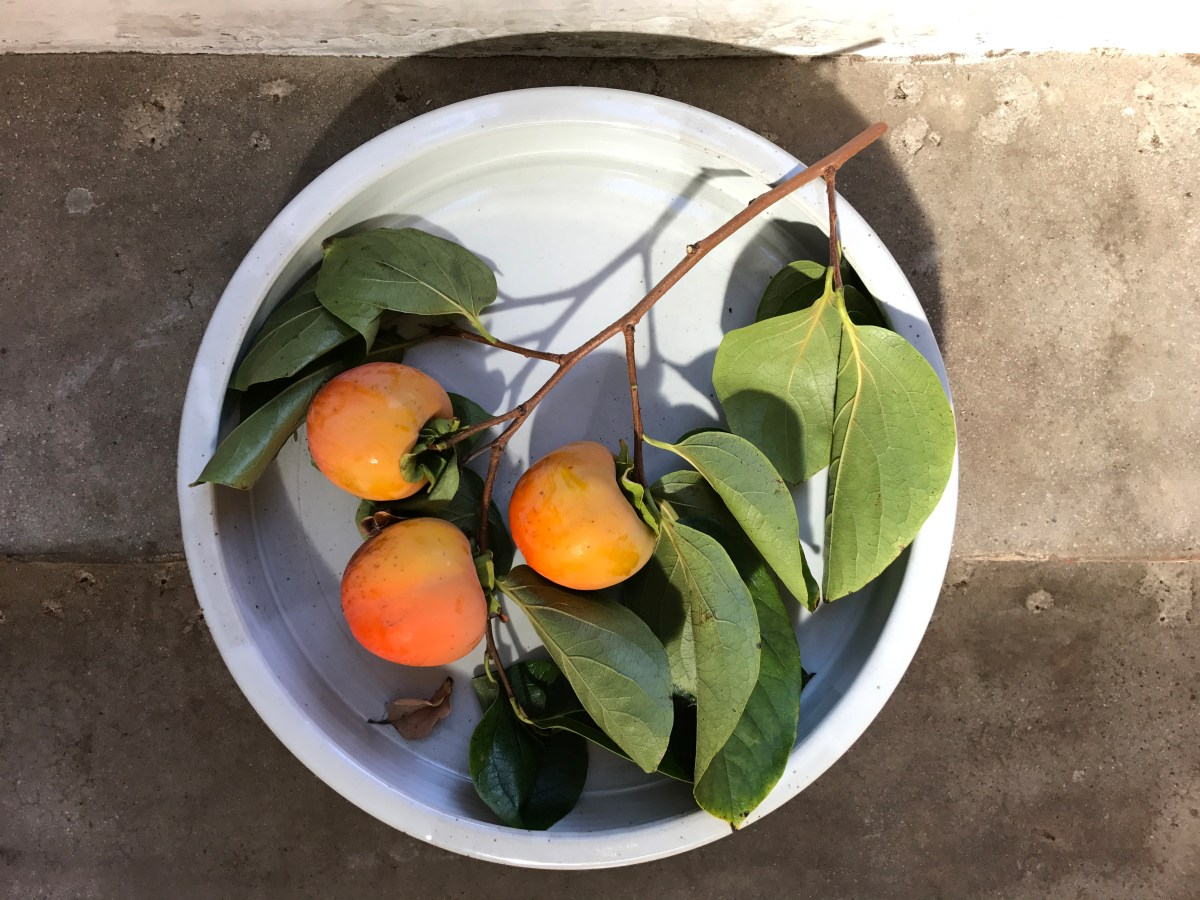 shallow white dish with persimmons