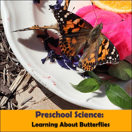 Free preschool Butterfly Unit