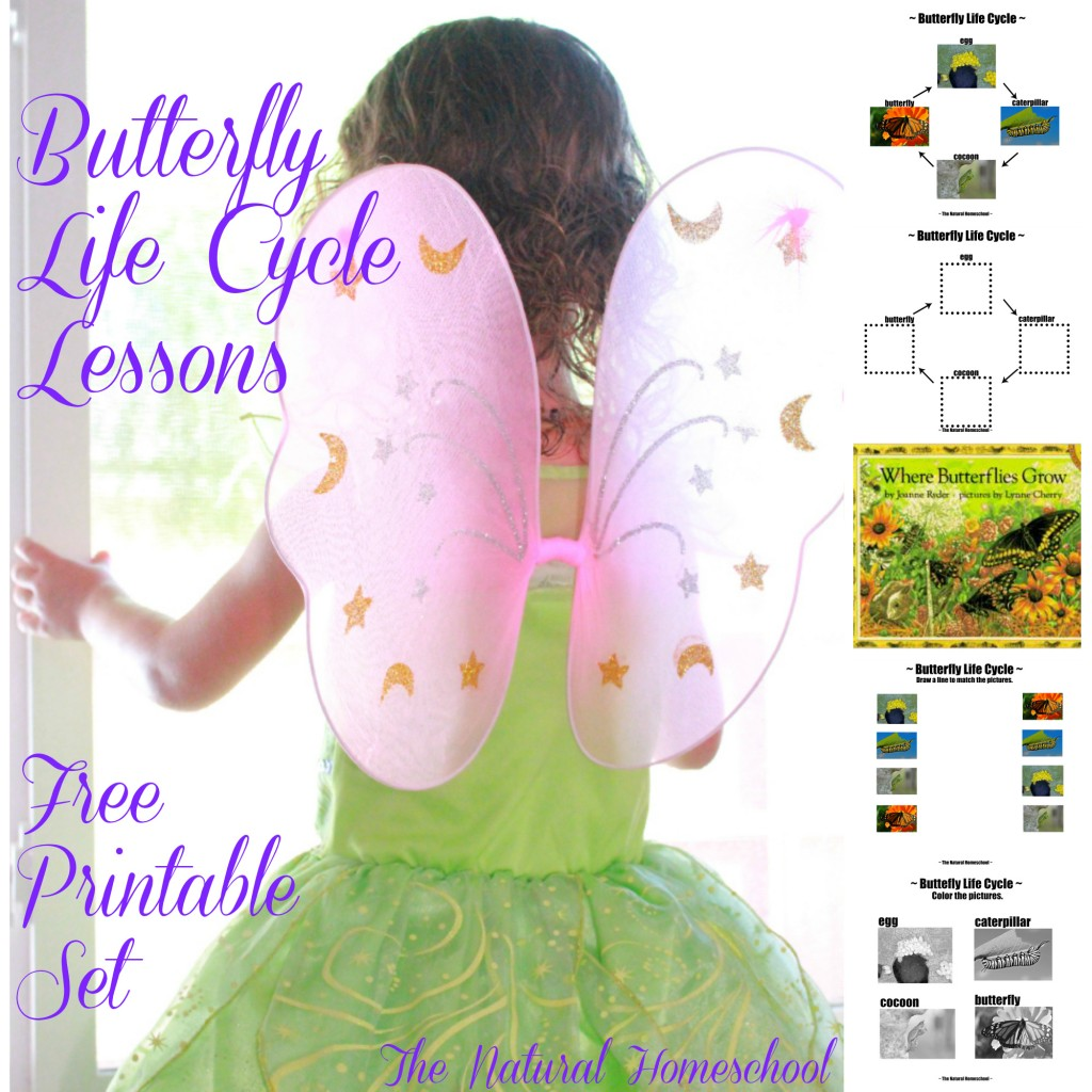 Free Butterfly Life Cycle Lessons