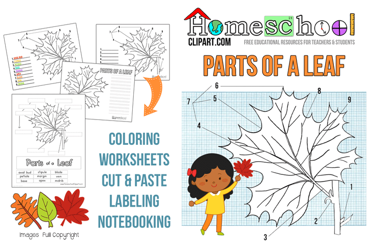 FREE Parts Of A Leaf Unit Study Free Homeschool Deals