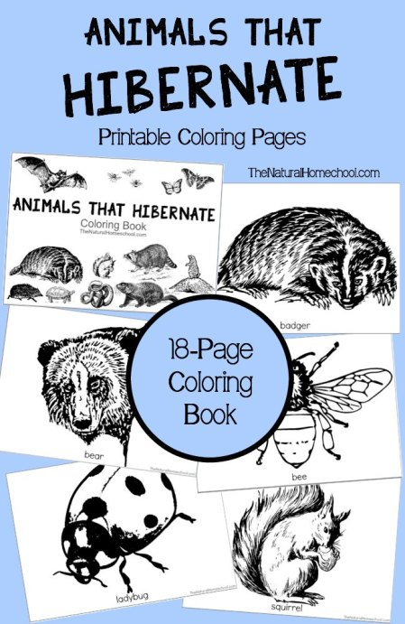 Free Animals That Hibernate Coloring Pages