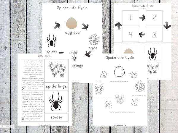 Free Spider Life Cycle Worksheets