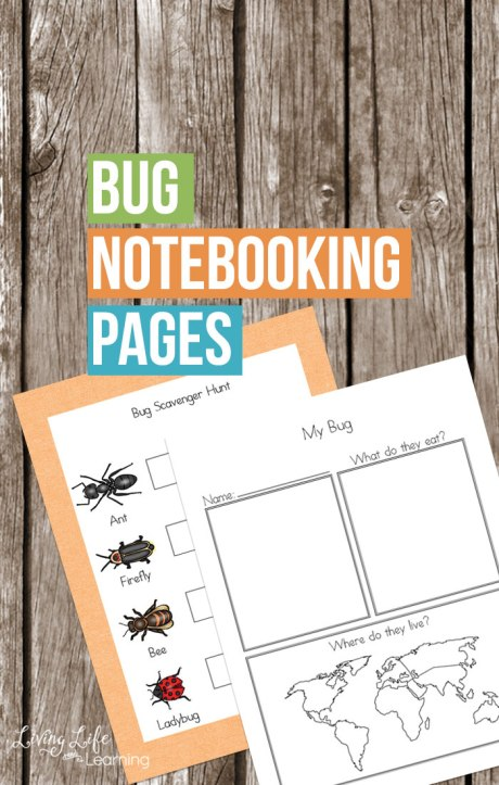 Free Bug Notebooking Pages