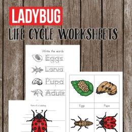 Free Ladybug Life Cycle Worksheets