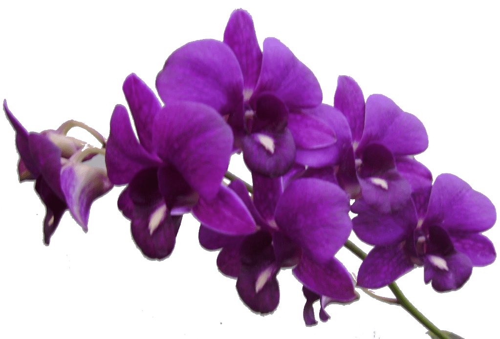 Purple Flower Transparent PNG Pictures Free Icons And