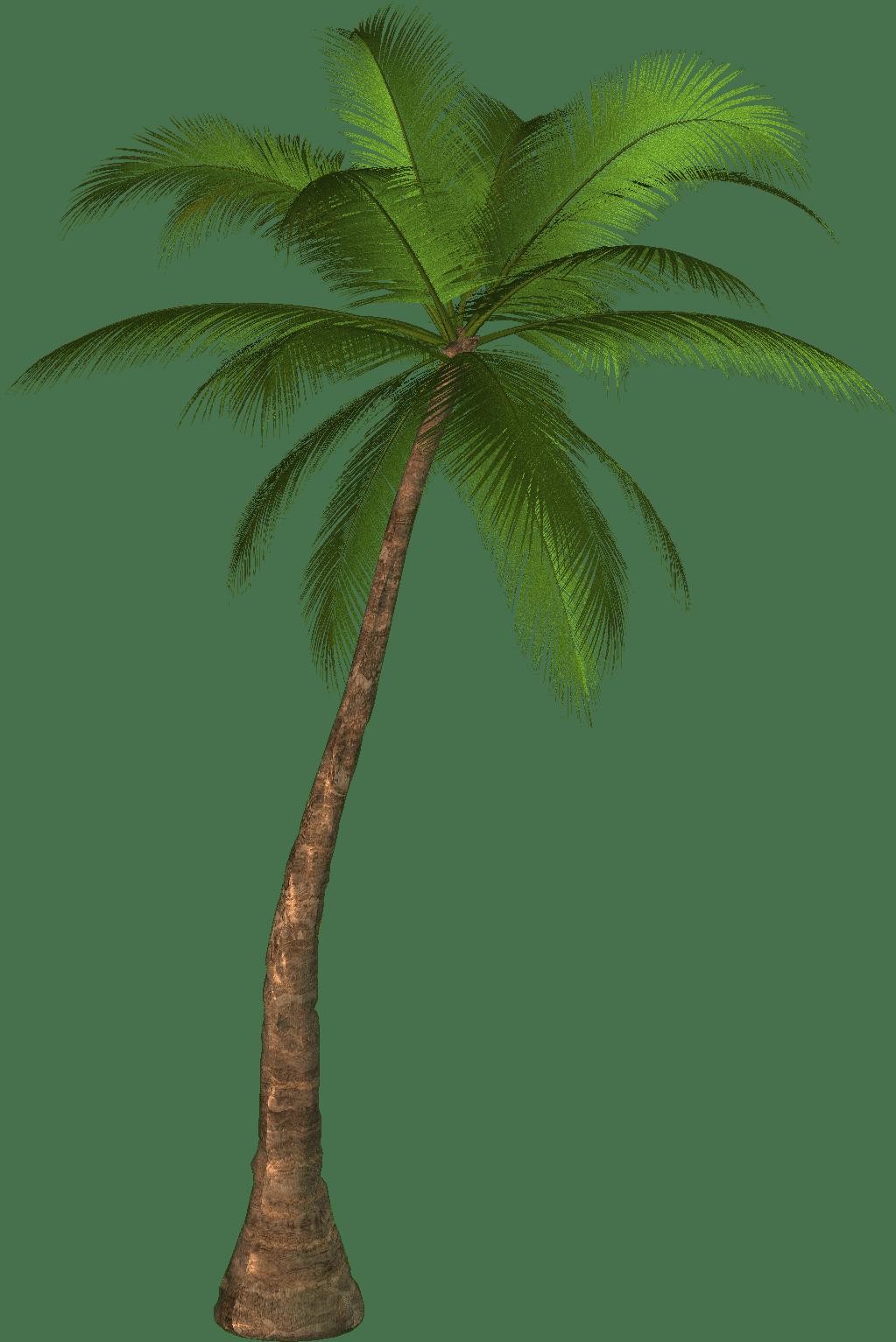 Art Clip Palm Leaves Tree