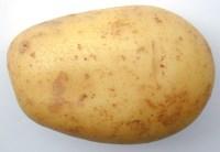 https://i1.wp.com/www.freeimageslive.com/galleries/food/fruitveg/pics/potato0730.jpg?resize=200%2C138
