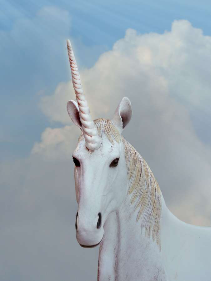 Encontrá souvenir unicornio para foto en mercadolibre.com.ar! 🥇 Imagen de Primer plano de unicornio blanco - 【FOTO